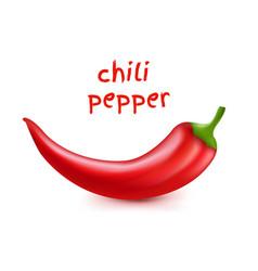 chili pepper vector image
