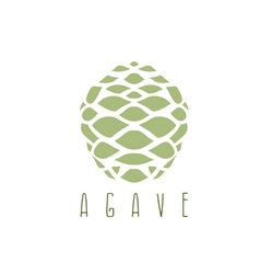 Design template of the agave root vector