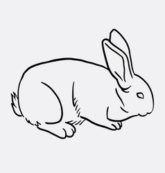rabbit pet animal sketch vector image