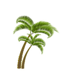 Two tropical green palm isolated on white vector