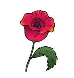 Oriental red poppy vector