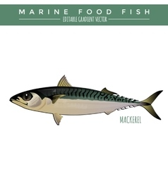 Mackerel marine food fish vector