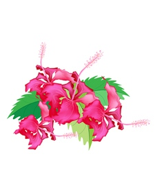 A Stack of Fresh Red Hibiscus Flowers vector image