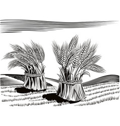 Landscape with sheaves of ripe wheat vector