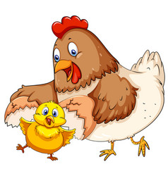 Mother hen and little chick vector