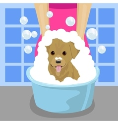 Pet groomer washing dog with soap foam vector