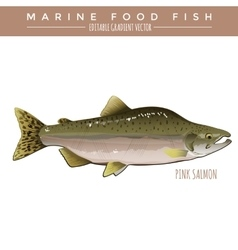 Pink salmon marine food fish vector