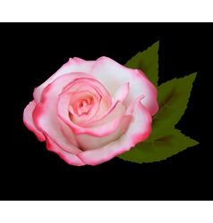 beautiful pink rose vector image vector image