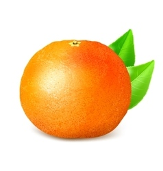 Ripe whole grapefruit with leaves vector image