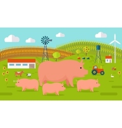 Pigs on Farmyard Concept vector image vector image