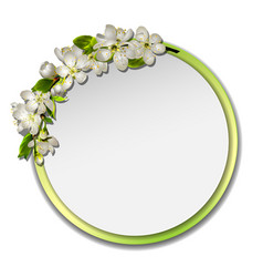 spring round frame with cherry branch blossom vector image