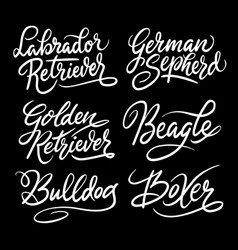 kind of dogs hand written typography vector image