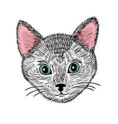 Hand drawn face of young cat vector