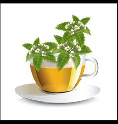 Lemon balm herbal tea in a transparent cup vector