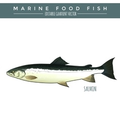 Salmon marine food fish vector