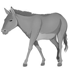 A grey donkey vector image vector image