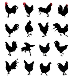 roosters and hens vector image vector image