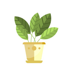 Spathiphyllum house plant indoor flower in pot vector