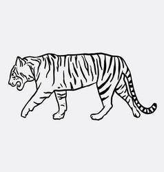 tiger mammal animal sketch vector image