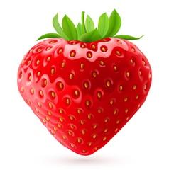 Appetizing strawberry vector