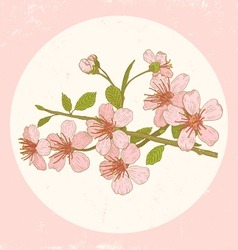 sakura pink vector image