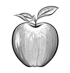 Engraving apple vector