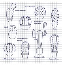 Cacti in pots sketch vector image