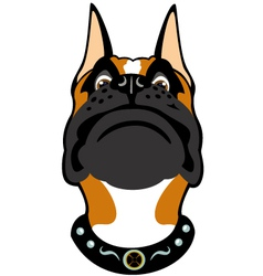 cartoon boxer head vector image vector image