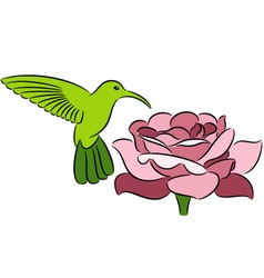 Hummingbird and rose vector image