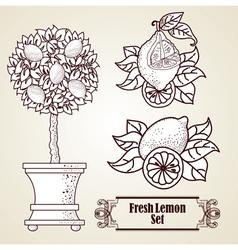 Lemon set in retro style vector image
