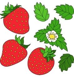 Set ripe juicy strawberries vector image vector image