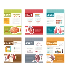 Internal human organs banners vector