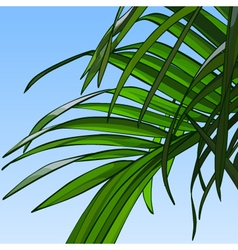 Background of sky with palm leaves vector