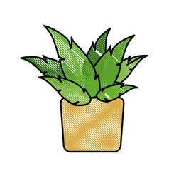 drawing pot plant decoration botanic natural vector image