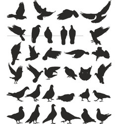 Pigeon silhouettes bird vector