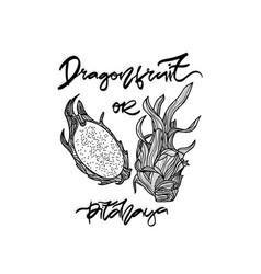 dragonfruit monochrome vector image