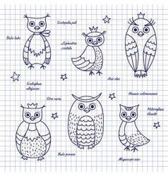Sketch owls hand-draw vector