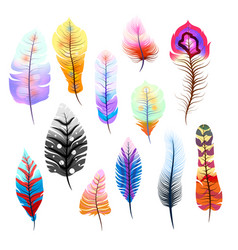 Big set of different colorful feathers on white vector