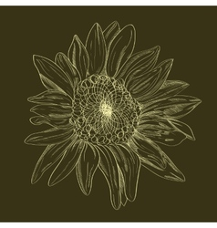hand-drawing flower vector image vector image