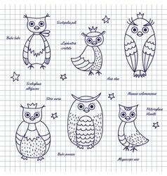 Sketch owls Hand-draw vector image