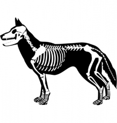 X-ray dog vector