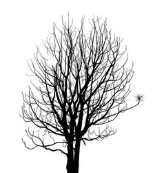 dead tree without leaves sketched vector image