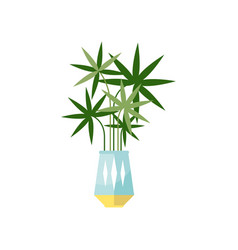 Palm tree house plant indoor flower in pot vector