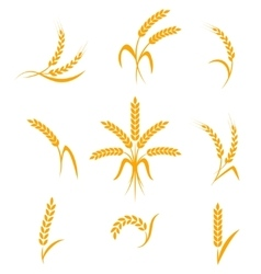 Abstract wheat ears icons vector image vector image