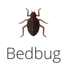 Bedbug parasite vector