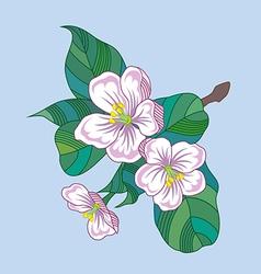 flowering twig of an apple tree vector image