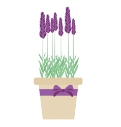 Isolated lavender flowers in pot vector