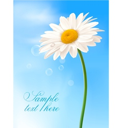 beautiful white daisy vector image