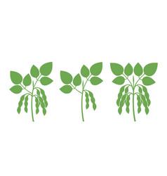 Soybean vector