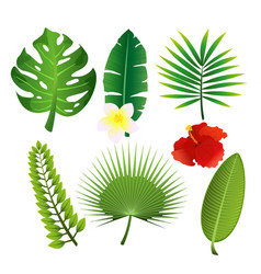 set of exotic tropical leaves vector image